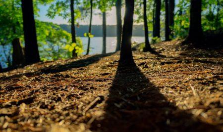 Javni razpis za operacijo naložbe v pred industrijsko predelavo lesa iz PRP 2014-2020 za leto 2017