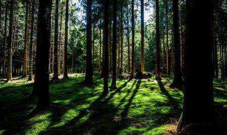 Javni razpis za dodeljevanje posojil kmetijskim in gozdarskim projektom- A 2018