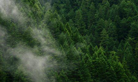 Javni razpis za financiranje obratnih sredstev in opreme za obdelovalce in predelovalce lesa – B2 2018
